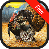 Turkey (bird) Sound Ringtones