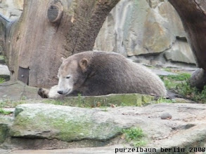 Photo: Knut goennt sich ein wenig Ruhe ;-)