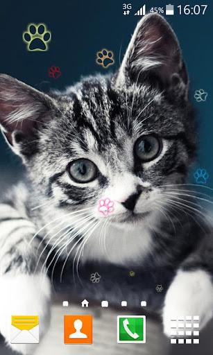 고양이 라이브 배경 화면