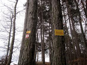 Photo: Abzweigung Richtung Ruine Merkenstein