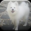 American Eskimo Dog Game icon