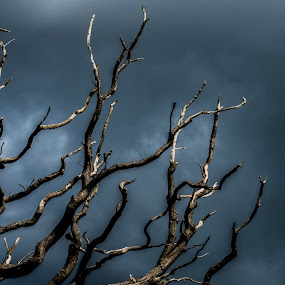 Dead Tree by Doug Faraday-Reeves - Nature Up Close Trees & Bushes ( storm, tree, dark, dead, clouds, branches )