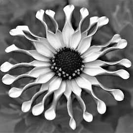 by Koh Chip Whye - Black & White Flowers & Plants (  )
