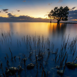 The Mangrove Spikes by Raffy Nadayag - Landscapes Sunsets & Sunrises ( lone tree, sunrise, seascape, landscape, mangrove )