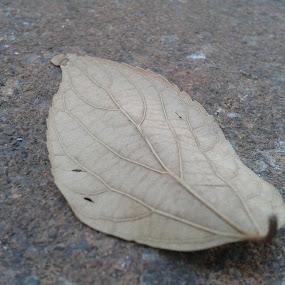 Lonely Leaf by Marilyn Kruger - Instagram & Mobile Android