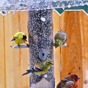 Bird Banquet by Dennis Kemper - Animals Birds