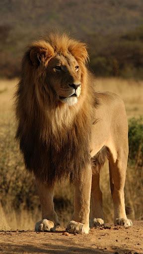 獅子座 しし座 ライブ壁紙