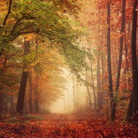 Harmonium by Zsolt Zsigmond - Landscapes Forests ( orange color, red, nature, tree, season, autumn, outdoors, forest, woodland, leaf, landscape )