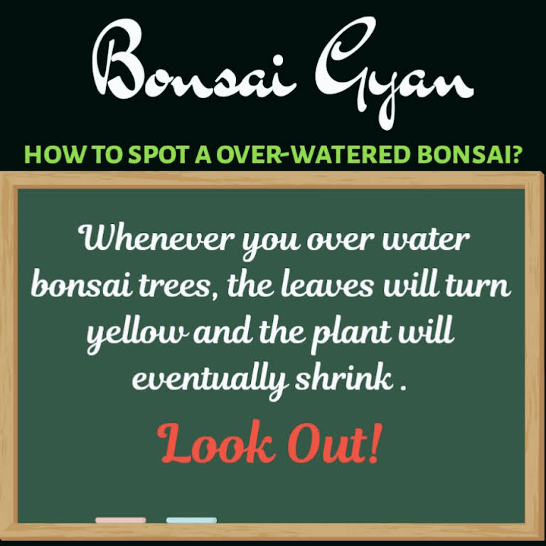You , Me and Bonsai - Nursery in Secunderabad