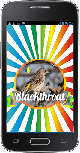 Masteran Kicau Blackthroat