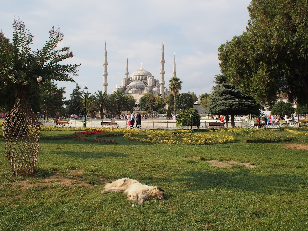 stray dog blue mosque
