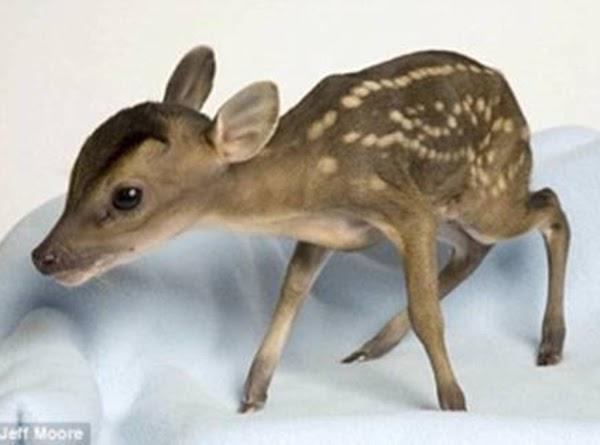One Pound Deer Recipe