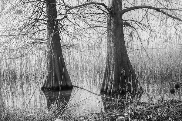 Lo stagno misterioso di DiegoCattel