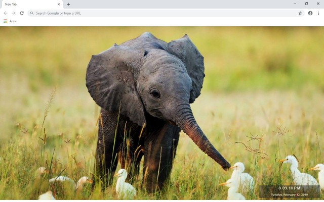 Elephant New Tab & Wallpapers Collection