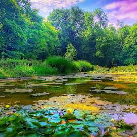 swamp by Dražen Pintar - Instagram & Mobile iPhone