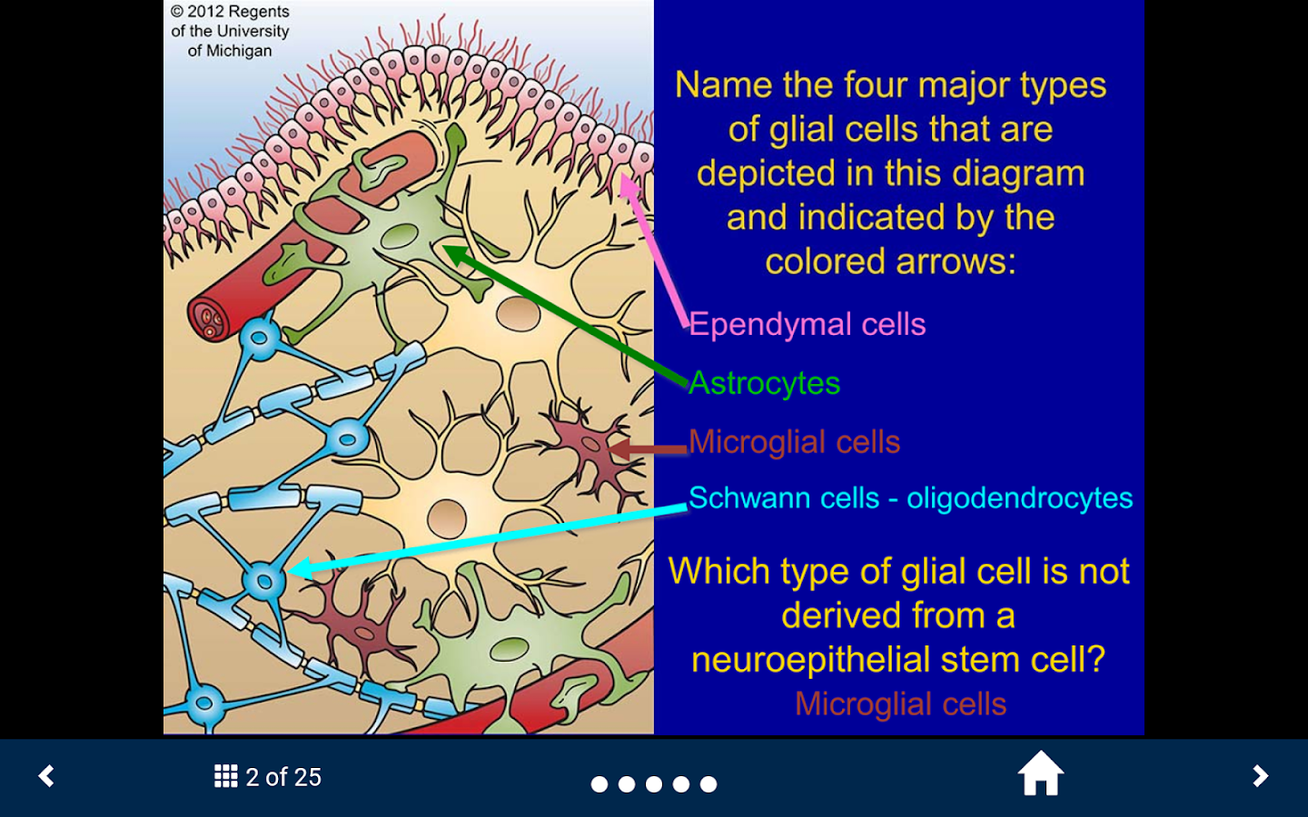 Nervous System & Sense Organs- screenshot