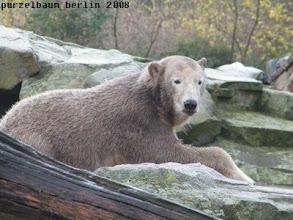 Photo: Knut testet den Felsen als Ruheplatz ;-)