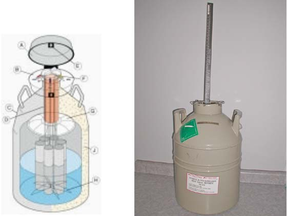 Interior schematic view of a 6 canister semen/embryo storage tank with the inner chamber with LN2 shown in blue. (Left picture obtained from the MVE SC Series - Aluminum Storage Tanks Catalogue, Chart Industries, Inc).