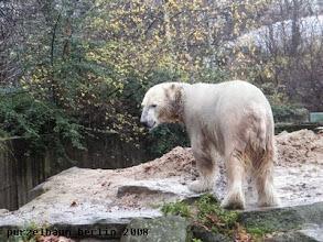 Photo: Eisbaerchen Knut ist auf Anlagenrundgang ;-)