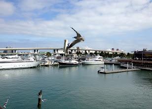 Photo: Biscayne Bayn ylittäviä siltoja - ei kun lintuvalokuva!