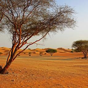 by Lealiza Seiler - Landscapes Deserts ( sands, desert, tree )