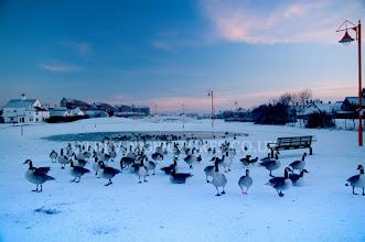 Photo: MORE BIRDSEED PLEASE