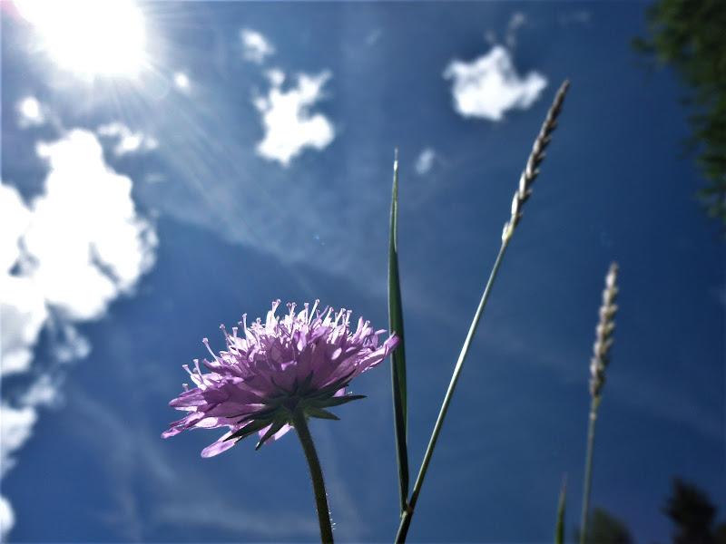 Solis statio - il sole si è fermato di Elisabetta Castellano