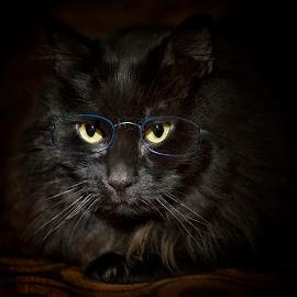 by Miguel Lopez De Haro - Animals - Cats Portraits ( negro, gato )