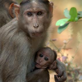 Mamas Boy - leave us alone by Rajesh Srinivasan - Animals Other Mammals