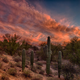 Tucson Tonight by Charlie Alolkoy - Landscapes Deserts ( clouds, sky, desert, sunset, arizona, tucson, cactus )