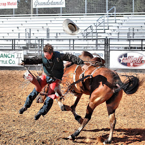 by Stacey Nagy - Sports & Fitness Rodeo/Bull Riding ( horses, rodeo, stacey nagy photography, stacey's horses, rodeo horses, stacey nagy )