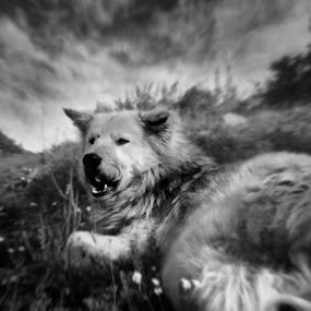 An old friend by Darko Nachevski - Animals - Dogs Portraits
