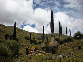 Photo: Field of Puta Raimondis.