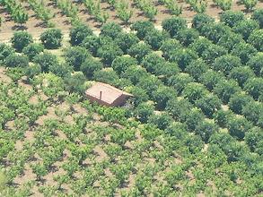 Photo: Mandalin-Şeftali Bahçeleri  Keçi Kalesi - 16.05.2010