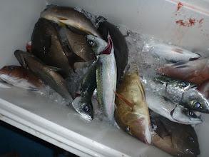 """Photo: """"戸田さん""""の釣果 クチブト、真鯛も入りましたが これまたサバに邪魔されて・・・"""