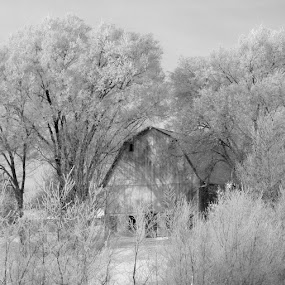 Ghost Barn by Pat Brink - Landscapes Weather ( b&w, winter, cold, barn, frost, black and white, b and w, landscape, monotone, mono-tone )