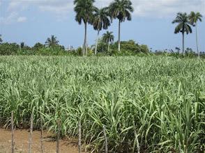 Photo: Sustainable Sugarcane Initiative (Sistema de Caña de Azúcar Sostenible - SiCAS) 2012 [Photo by Rena Perez]