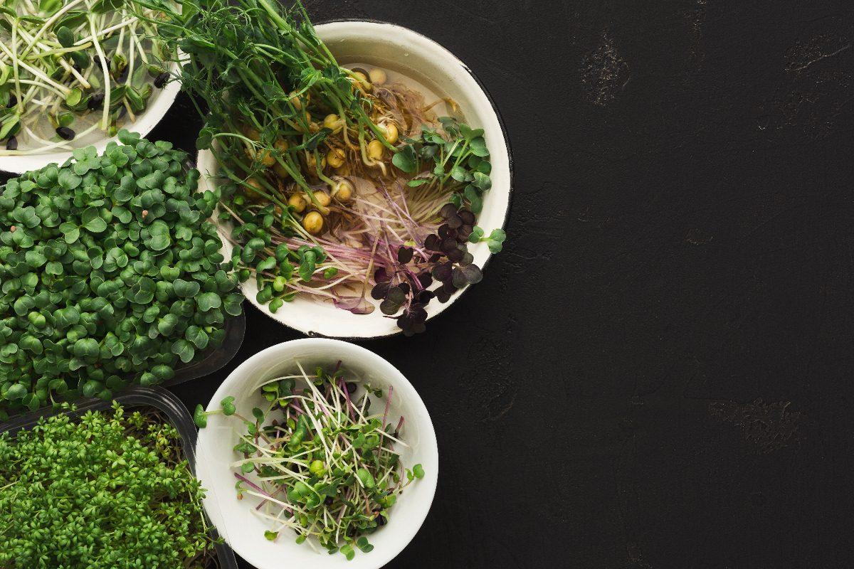 microgreens health benefits
