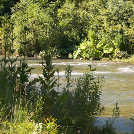 Природа by Georgi Kolev - Nature Up Close Trees & Bushes ( треви., слънце., храсти., река., дървета. )