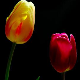 soft light by Carmelo Parisi - Flowers Flower Arangements