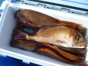 Photo: オガワさんの釣果です! 真鯛12枚、イサキ・・・でした!