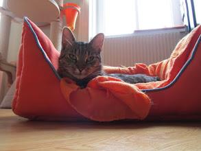Photo: Sambuco fühlt sich wohl einsam im großes Bettchen?