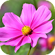 Imágenes con Flores Preciosas Download for PC Windows 10/8/7