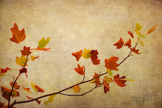 Photo: Nature minimalist Feel free to visit my website and see some of my works. www.naturephotographie.com #autumn  #foliage  #leaves  #textured