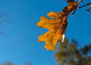 Photo: 2014 Photo Challenge, Week 4:Back-lit Leaves