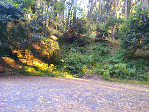 Photo: This picture shows how narrow the buffer between the eucalyptus grove and the nice picnic area under the oaks.