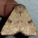 Bent line dart moth
