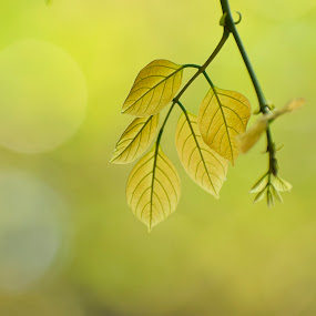 Spring news by Pritam Sharma - Nature Up Close Leaves & Grasses ( spring, green, leaves, nature, tree, leaf, trees,  )