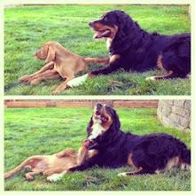 Photo: Akela meets her cousin