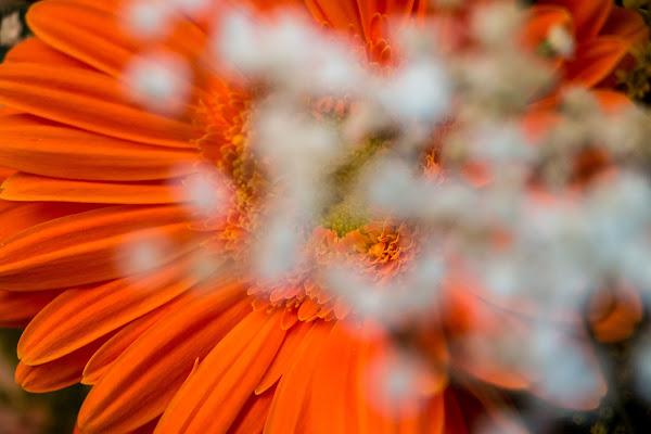 Natural orange di Crazylensphoto